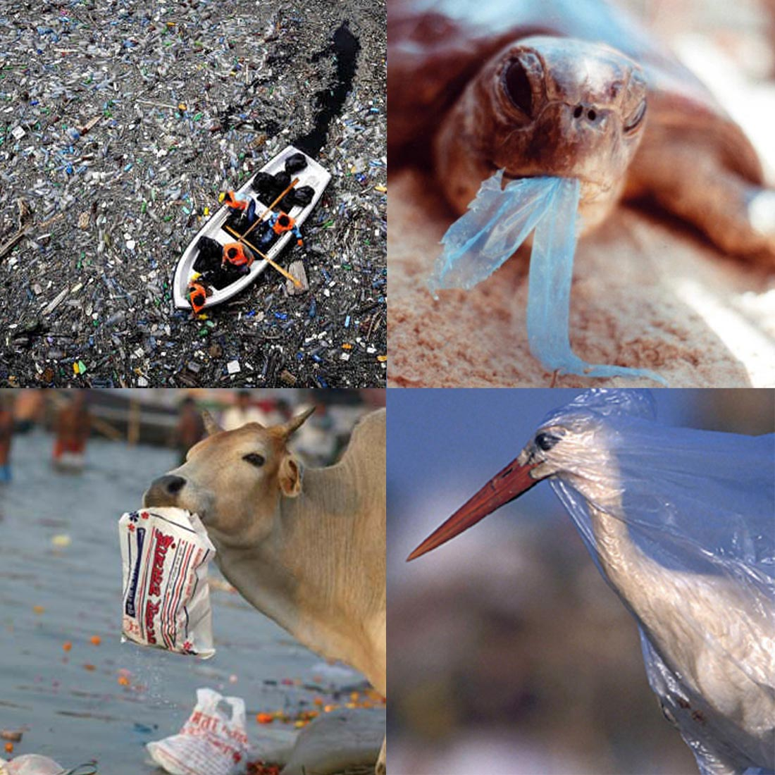 Bag at You - Fashion Blog - Animal victims of plastic bag abuse - International Plastic Bag Free Day