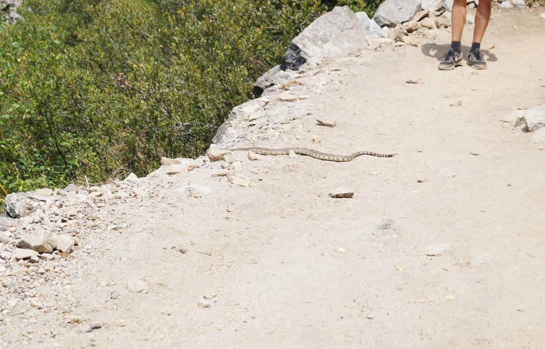 Bag-at-you---Travel-blog---Yosemite--California---Wildlife