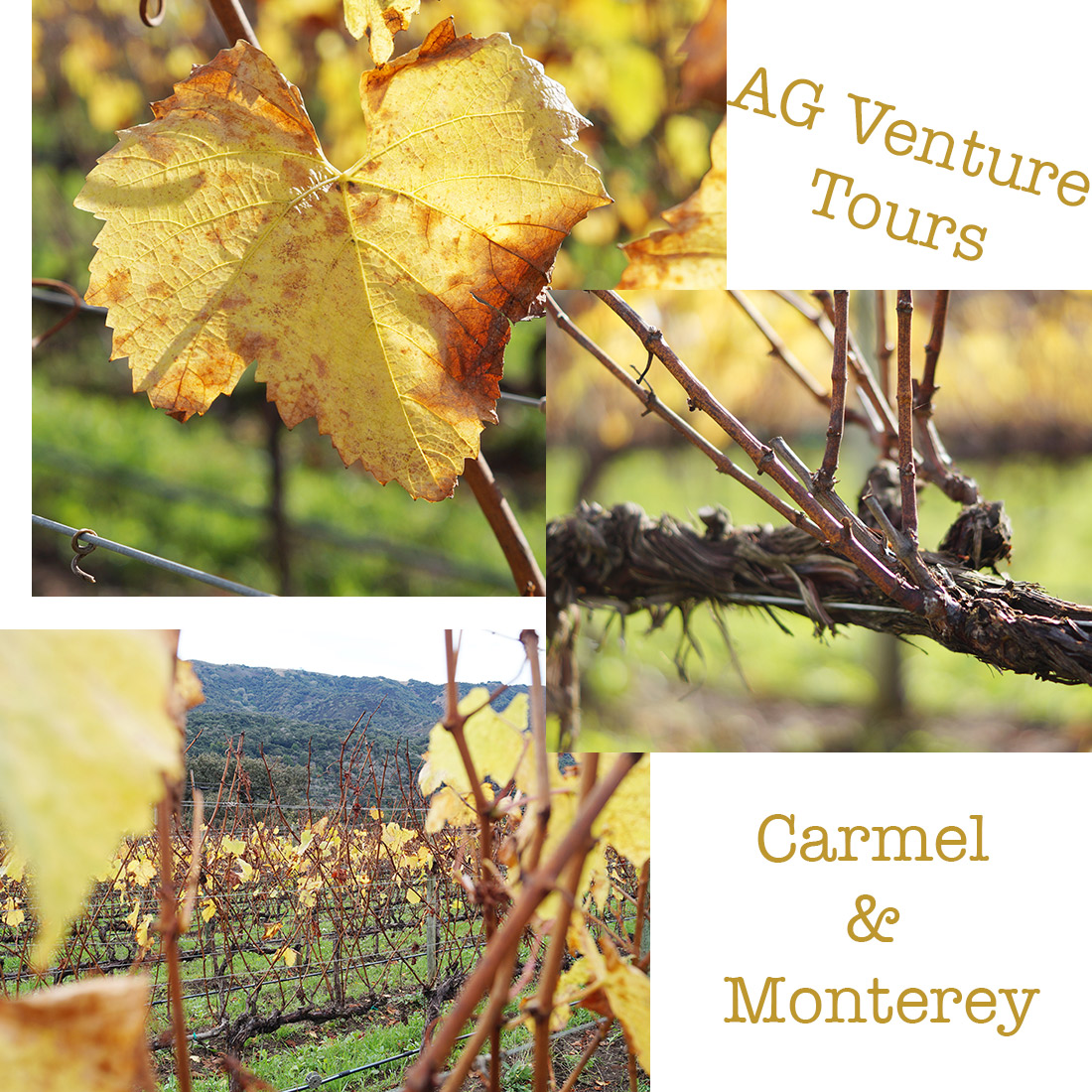 bag-at-you-ag-venture-tours-carmel-and-monterey