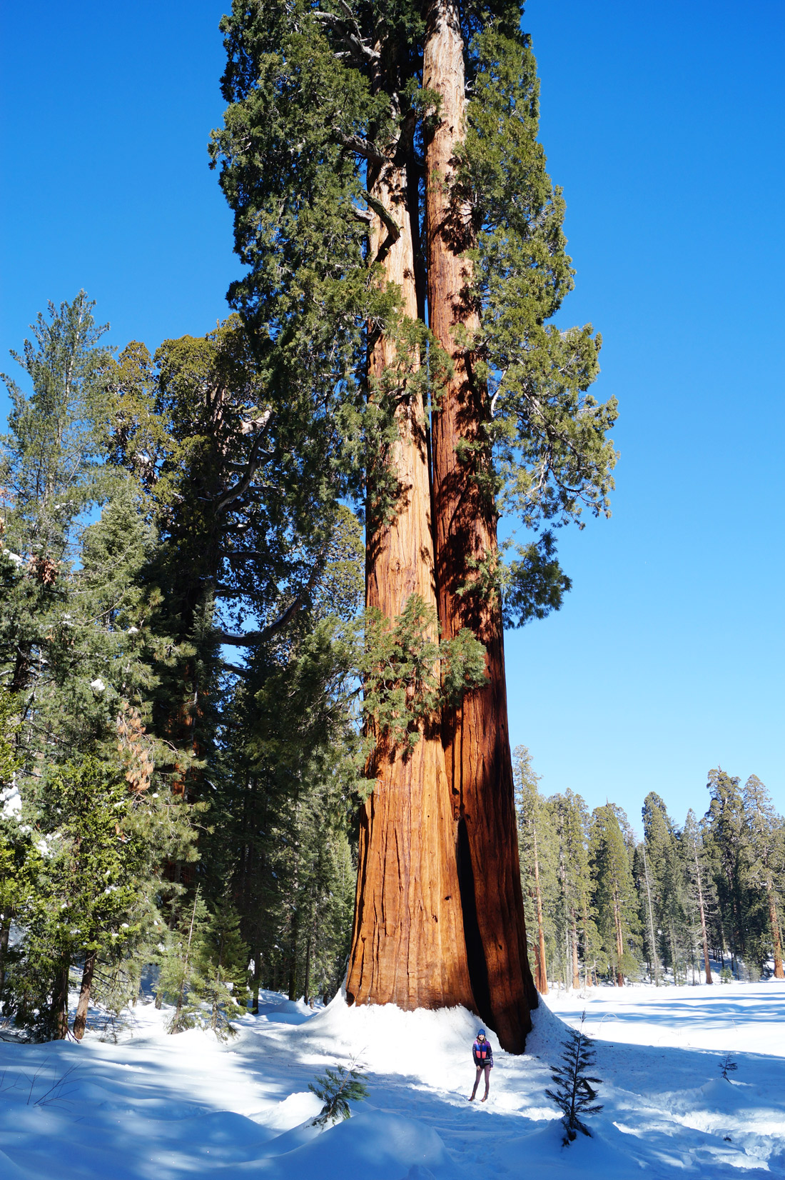 Bag-at-you---Travel---Sequoia-National-Park-California