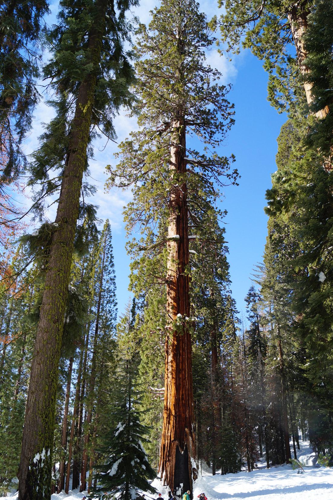 Bag-at-you---Travel-blog---General-Shermand-Tree-Sequoia