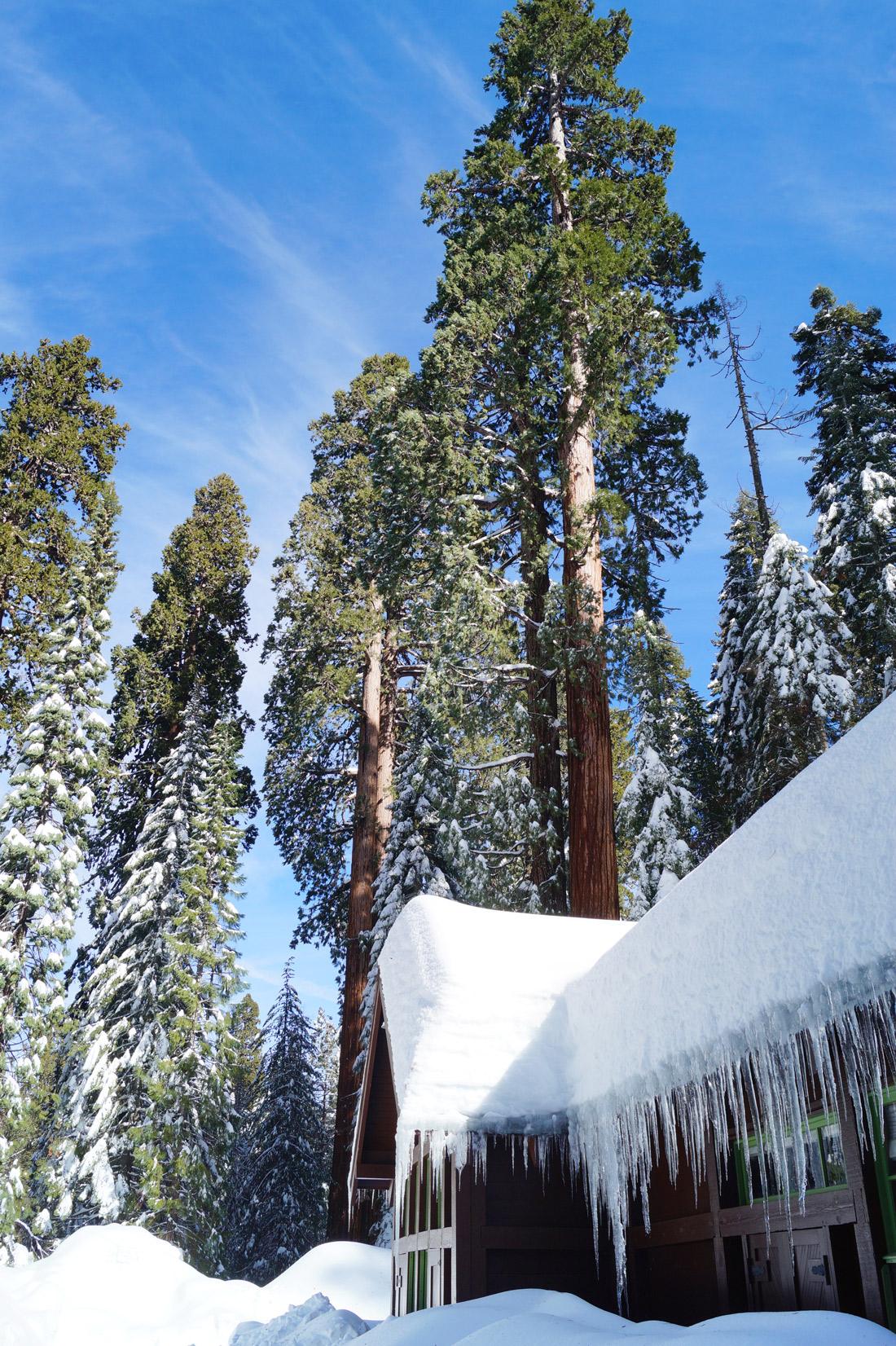 Bag-at-you---Travel-blog---Sequoia-National-Park-California