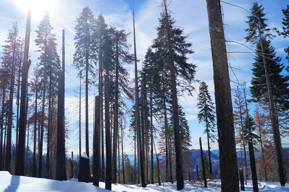Bag-at-you---Travel-blog---Sequoia-Trees