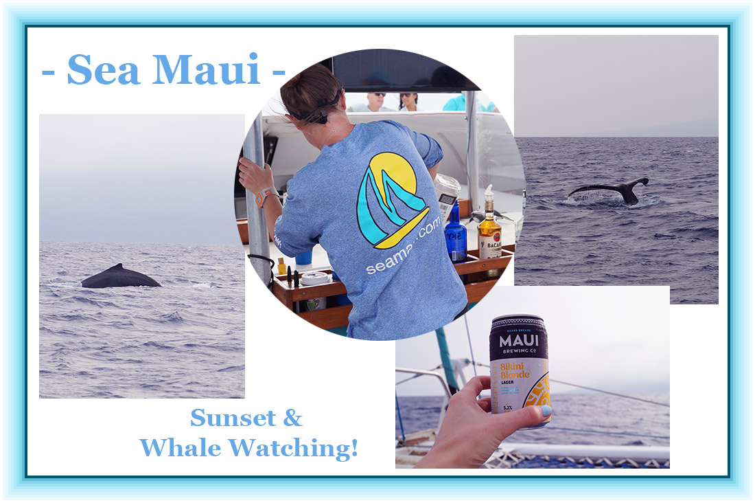 Bag-at-you---Travel-blog---Maui-Sea---Whale-Watching-at-Sunset