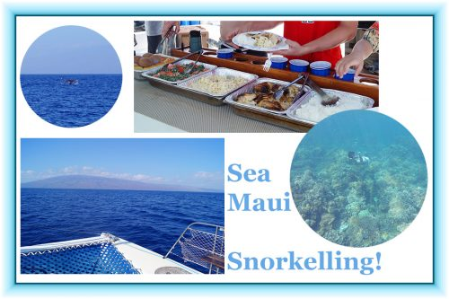 Bag-at-you---Travel-blog---Snorkelling-on-Maui---Sea-Maui