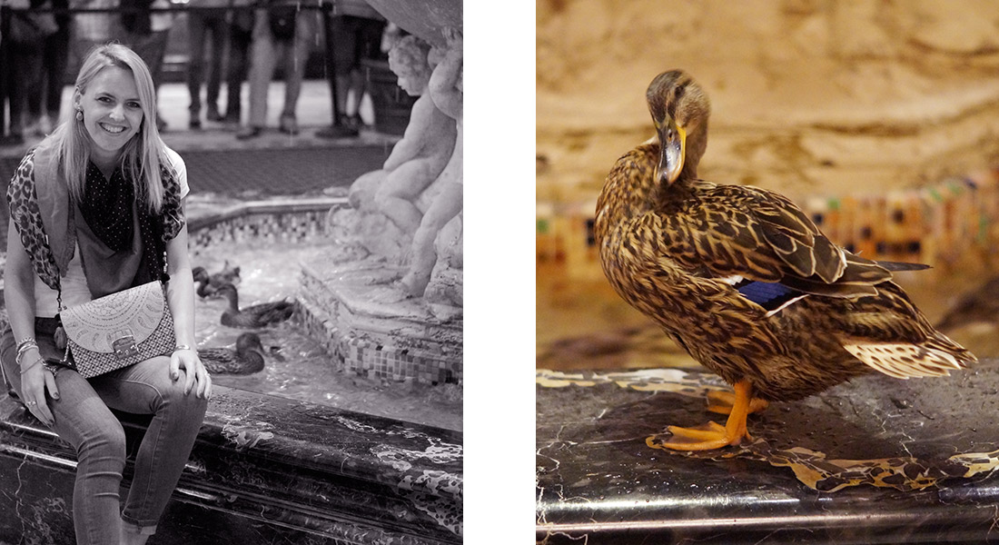 Bag-at-you---Travel-blog---Ducks-in-The-Peabody