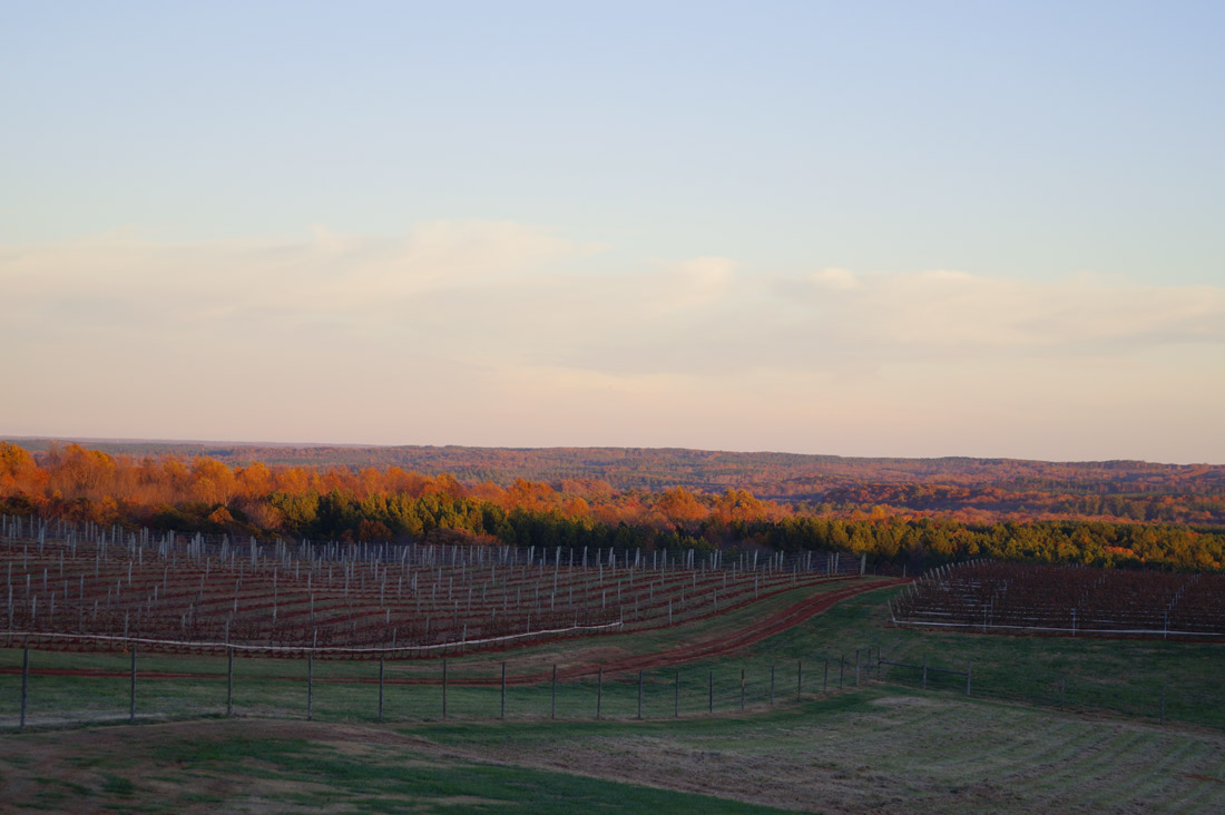 Bag-at-you---Travel-blog---Winery-Charlottesville